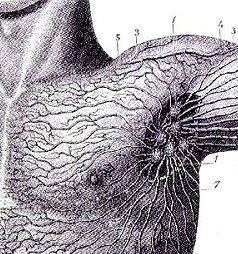 lymph node system rebounder