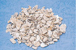 Coral Fossil (Weathered Coral)