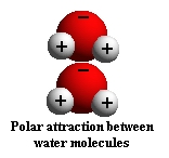 polar attraction water molecules